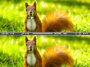 Squirrel difference online játék
